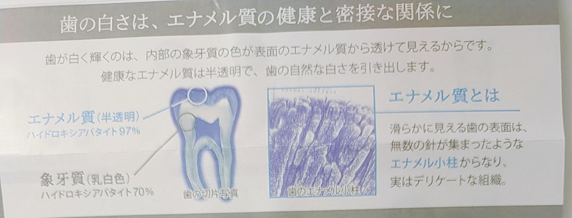 歯のエナメル質説明